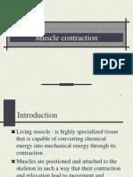 Muscle Contraction III