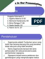 presentasi-zygomycota