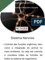 Neuroanatomia Novo (1)
