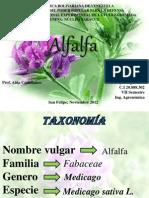Alfalfa.