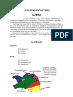 Aparato_respiratorio.docx