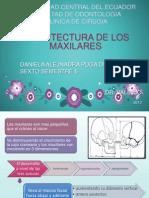 Arquitectura+de+Los+Maxilares