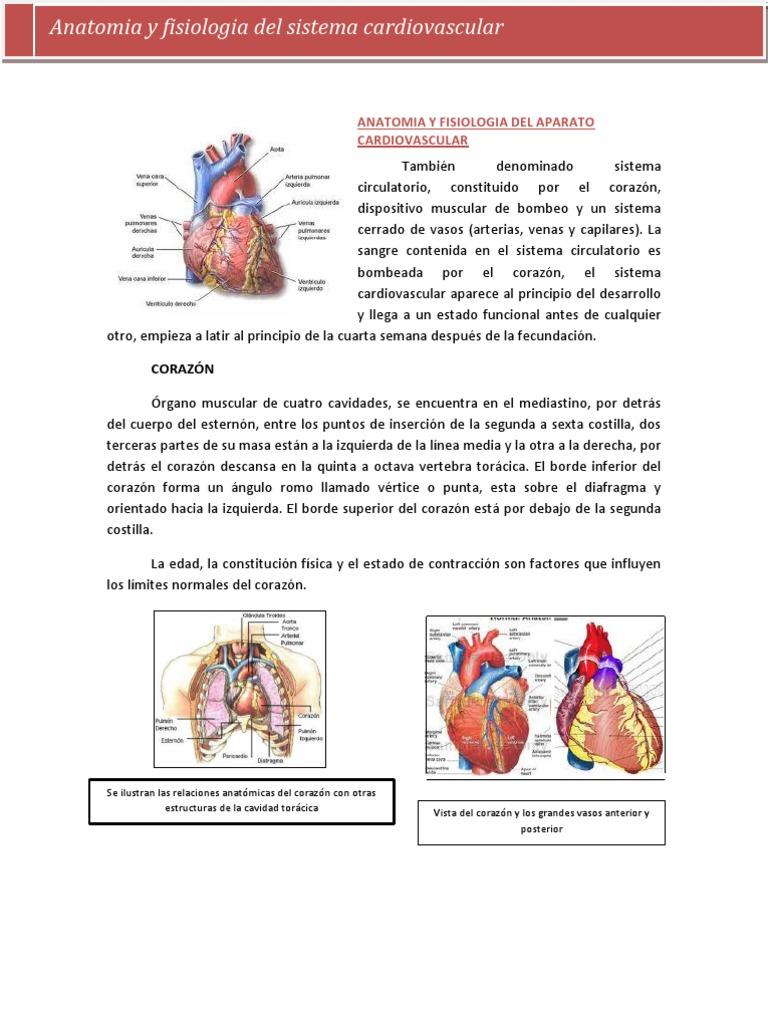 Encantador Anatomía Y Fisiología Become Galería - Imágenes de ...