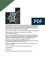 Foraminifera.docx