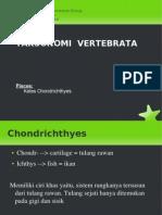 4-1-chondrichthyes