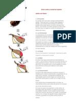 Como Cortar y Conservar el JAMON.doc