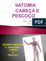 Aula 5 Sistema Vascular e Sanguineo