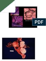 Curso de Patologias Para 2011