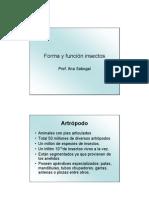 Forma y funcion insectos para colgar.pdf