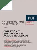 5.5. METABOLISMO DE PROTEÍNAS.
