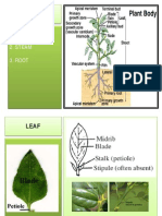 3. Plant Morphology_daun