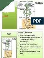 4. Plant Morphology_akar Ok(1)