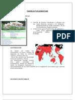 Familia Solanaceae y Valerianaceae