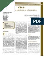 V84-8 Nueva Variedad Cana Azucar