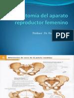 Clase.anatomia