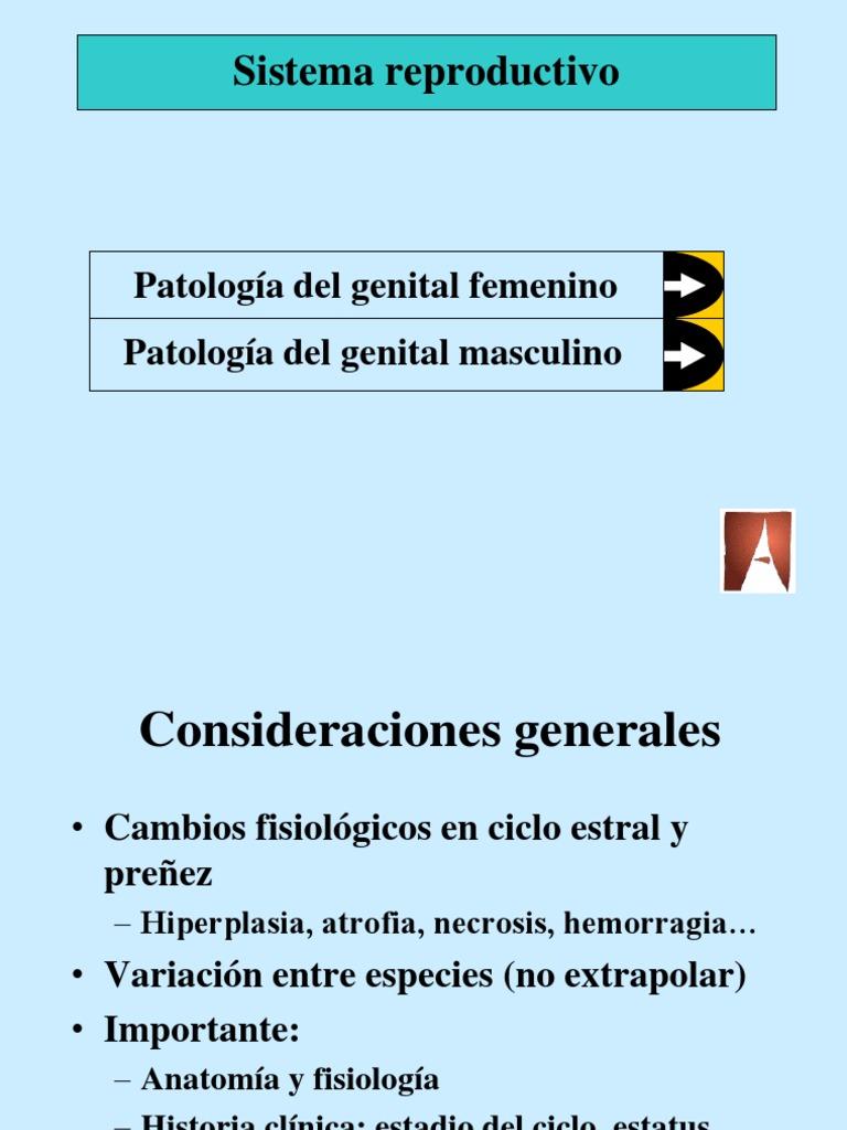 Reproductivo Hembra 10-11