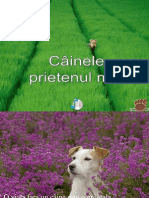 Cainele, Prietenul Meu