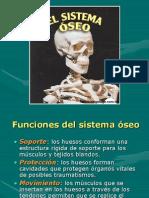 Sistema Osteo Muscular s4 (1)