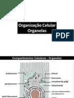 Organizacao Celular 1