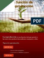 cn2funcionreproduccion-100603155232-phpapp01