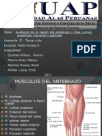 7 Antebrazo y Fosa Cubital