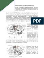 89415196-Disfunciones-cerebrales