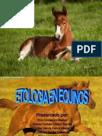 Equinos..ppt