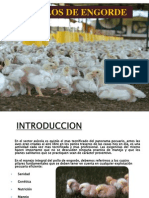 Pollos De Engorde..ppt