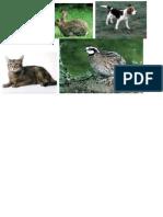 Animales Domesticos Dibujos