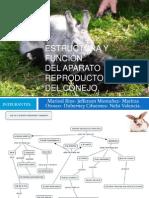 Estructura y Función.pptx