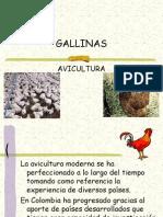 Gallinas Ponedoras..ppt