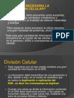 1. Division Celular