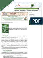 Maceratul de Urzica Si Coada Calului Www-gazetadeagricultura-Info