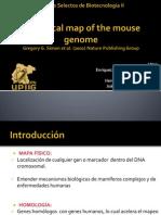 Genoma del Ratón II Sintetizada
