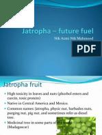 Jatropha Future Fuel