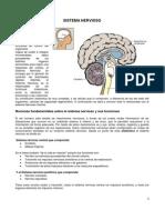 19 -Sistema Nervioso