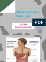 Anatomi Dan Fisiologi Manusia - Digestive Sistem Sistem Pencernaan