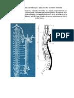 Aspecte Clinico-morfologice a Infarctului Ischemic Medular.pptx