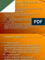 Aksioma Anatomi Saluran Pulpa