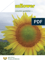 Prod Guide Sunflower