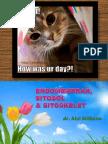 Endomembran
