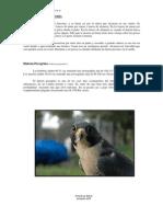 4. Aves de Altaneria.
