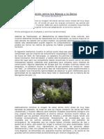 La Relacion Entre Los Mayas y La Selva