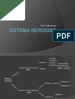 Sistema Nervioso i (2)