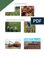 Agricultura Tradiciona o de Subsistenacia