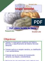 fisiologia-sensorial4788