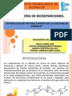 bioseparaciones proyecto pectina