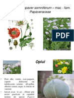 Opiul- Papaver somniferum – mac - fam