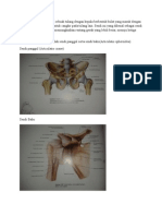 Anatomi Sendi-Sendi Karel Respati