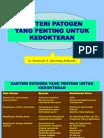 Bakteri patogen kbk